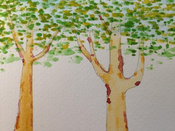 Birch Trees Highline NYC